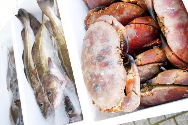Cornish-Crab-at-Truro-Farmers-Market-Matt-Jessop